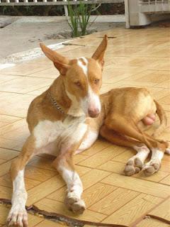 Perro robado en sagunto, Valencia